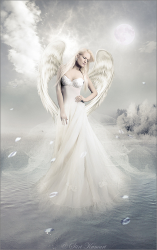 angel Of amor