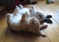 Bunnies Sleeping - bunny-rabbits photo
