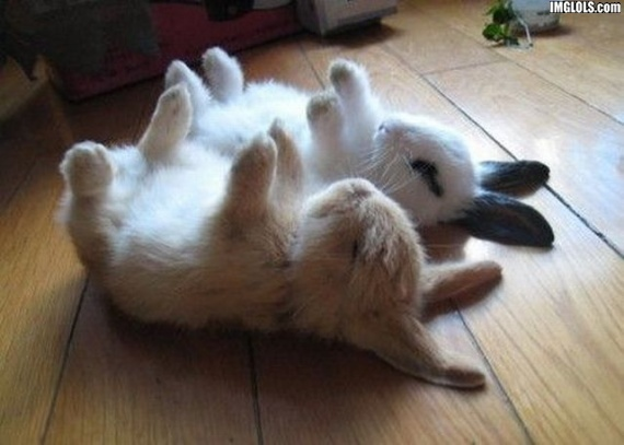 Bunnies Sleeping - Bunny Rabbits Photo (19638180) - Fanpop