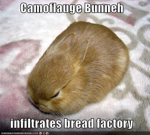 Camoflauge Bunny