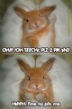 Cute Bunny - bunny-rabbits photo