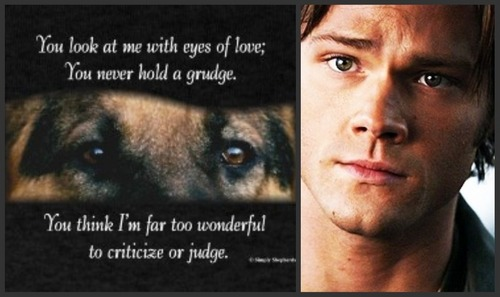 Dont Judge Sammy