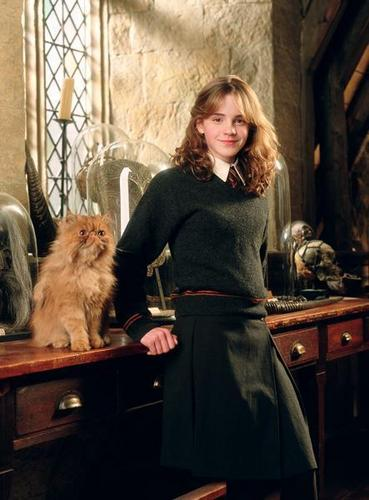Hermione Granger wolpeyper possibly with a persian cat and a kitten titled Miss Granger