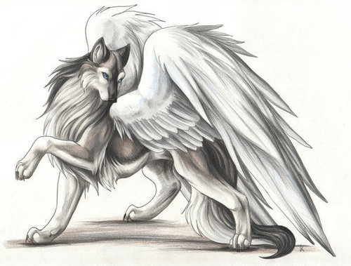 My winged serigala, wolf