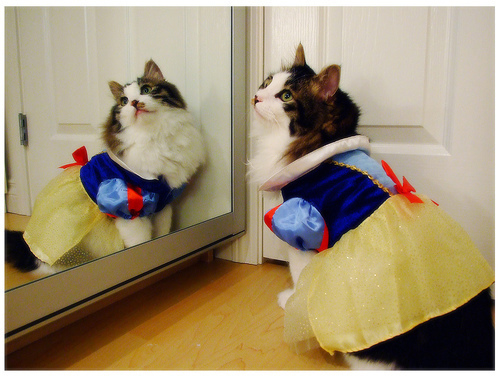 Snow White Kitty