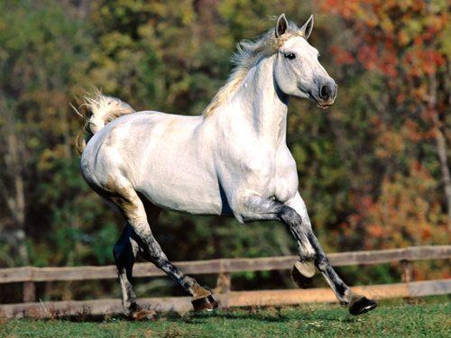 Spectacular cavalli