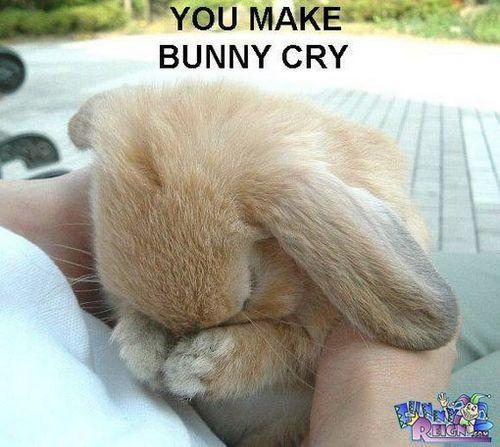 آپ Make Bunny Cry