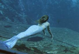 magical sirene beneath the seas