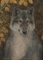 wolfs art^^ - the-anubians-wolf-pack fan art