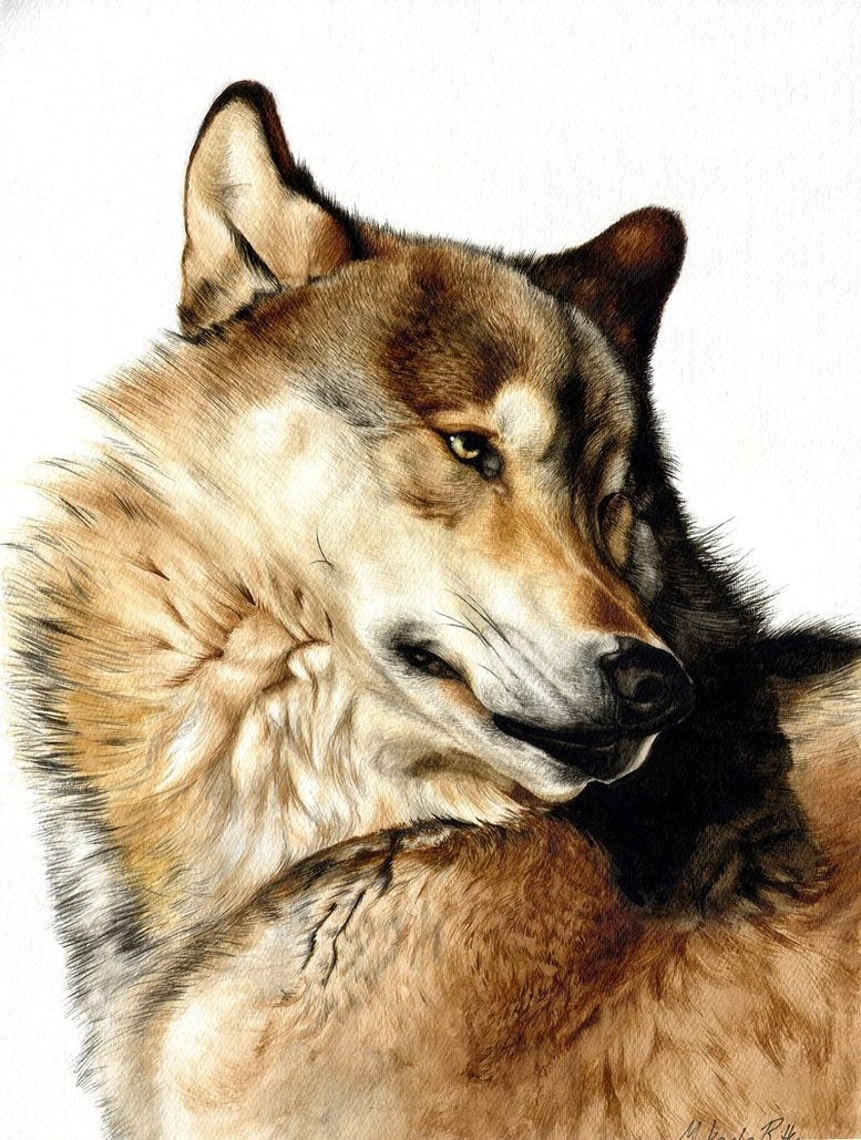 The anubian s wolf pack wolfs art
