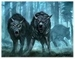 2 black wolves - the-anubians-wolf-pack icon