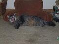 Astro The Cat