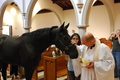 City goes to church - horses photo