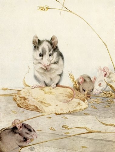 Dr Dolittle's Mice! - mice Photo
