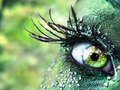 Eye - eyes photo