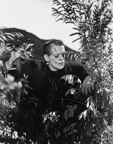 Frankenstein Stills