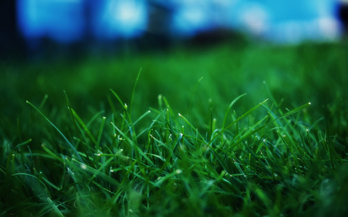 Grass Wallpaper - green Wallpaper