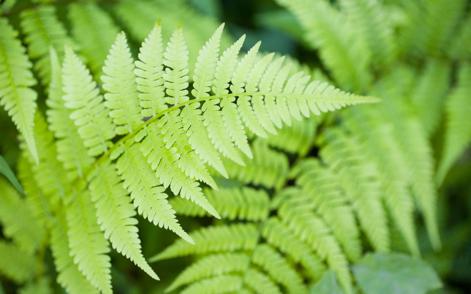 Green Green Ferns Wallpaper