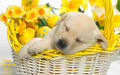 Happy Springtime Berni - yorkshire_rose wallpaper