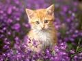 Happy Springtime Shirin