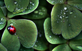 Ladybug Wallpaper - green wallpaper