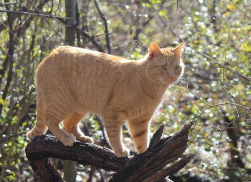 My Cat Max!