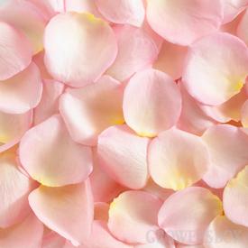 Perfumed rosa