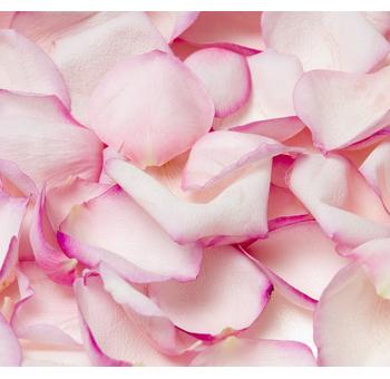 Perfumed roze