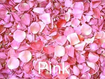 Pink (Color) wallpaper with a begonia, a rose, and a damask rose titled Perfumed Pink