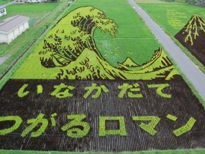 nasi, beras Paddy Art