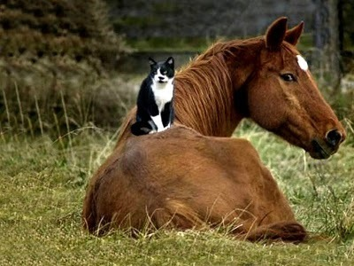 Unusual Friendship