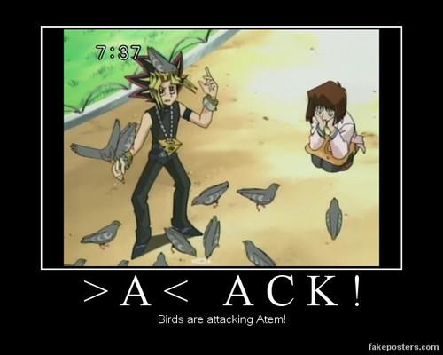 Yu-Gi-Oh! Funnys!