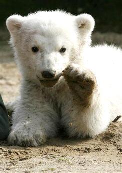 baby urso