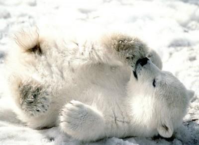 baby 熊