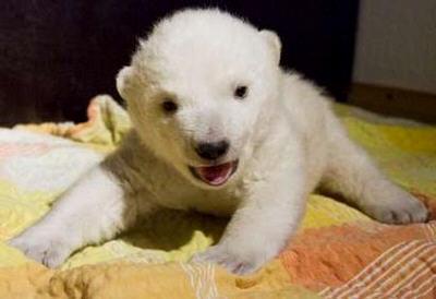 baby beruang