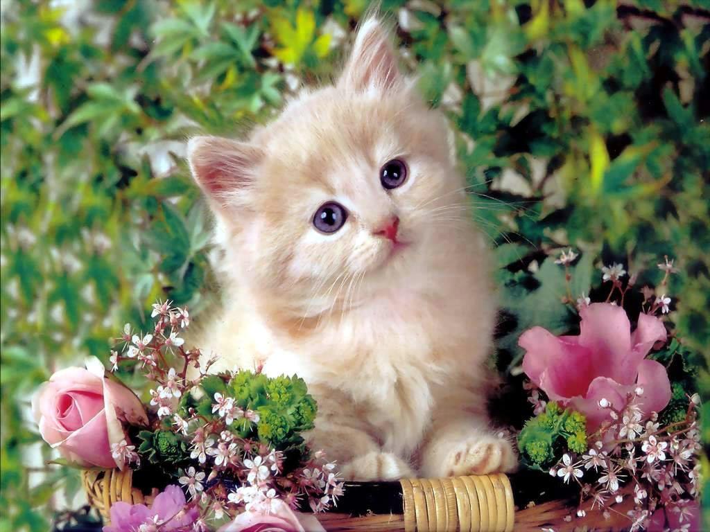 Baby Animals baby kittens