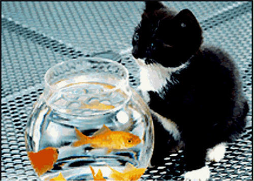 baby gatinhos