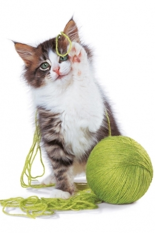 baby Котята