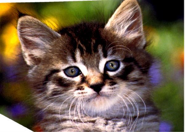 Baby kittens baby animals photo 19796183 fanpop