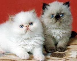 baby 小猫