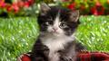baby kittens - baby-animals photo