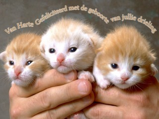 Baby Animals wallpaper probably with a kitten called baby kittens