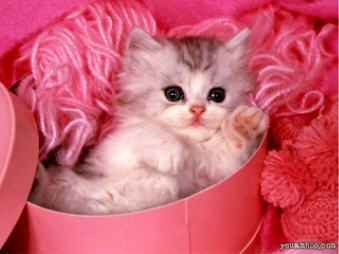 baby 子猫