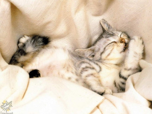 Baby Animals wallpaper entitled baby kittens
