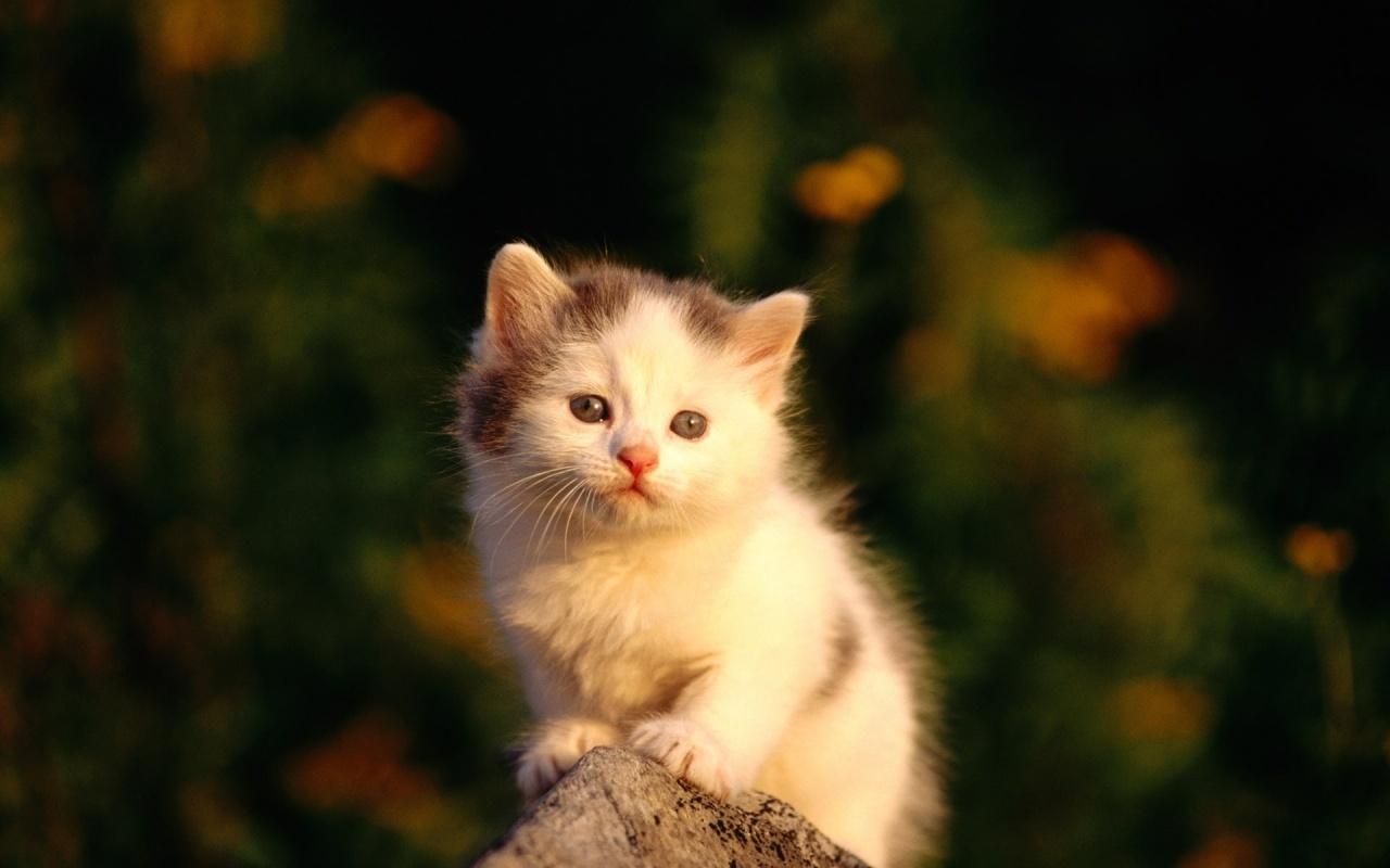 baby animal wallpaper cat - photo #23