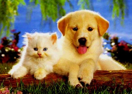 baby welpe & kitten