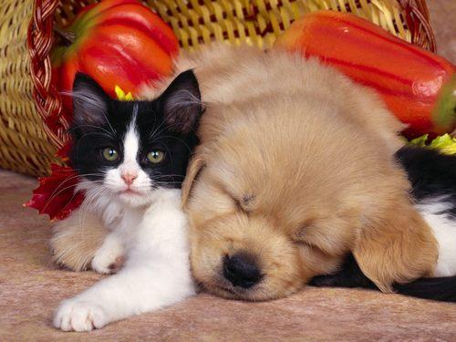 Baby Animals wallpaper titled baby puppy & kitten