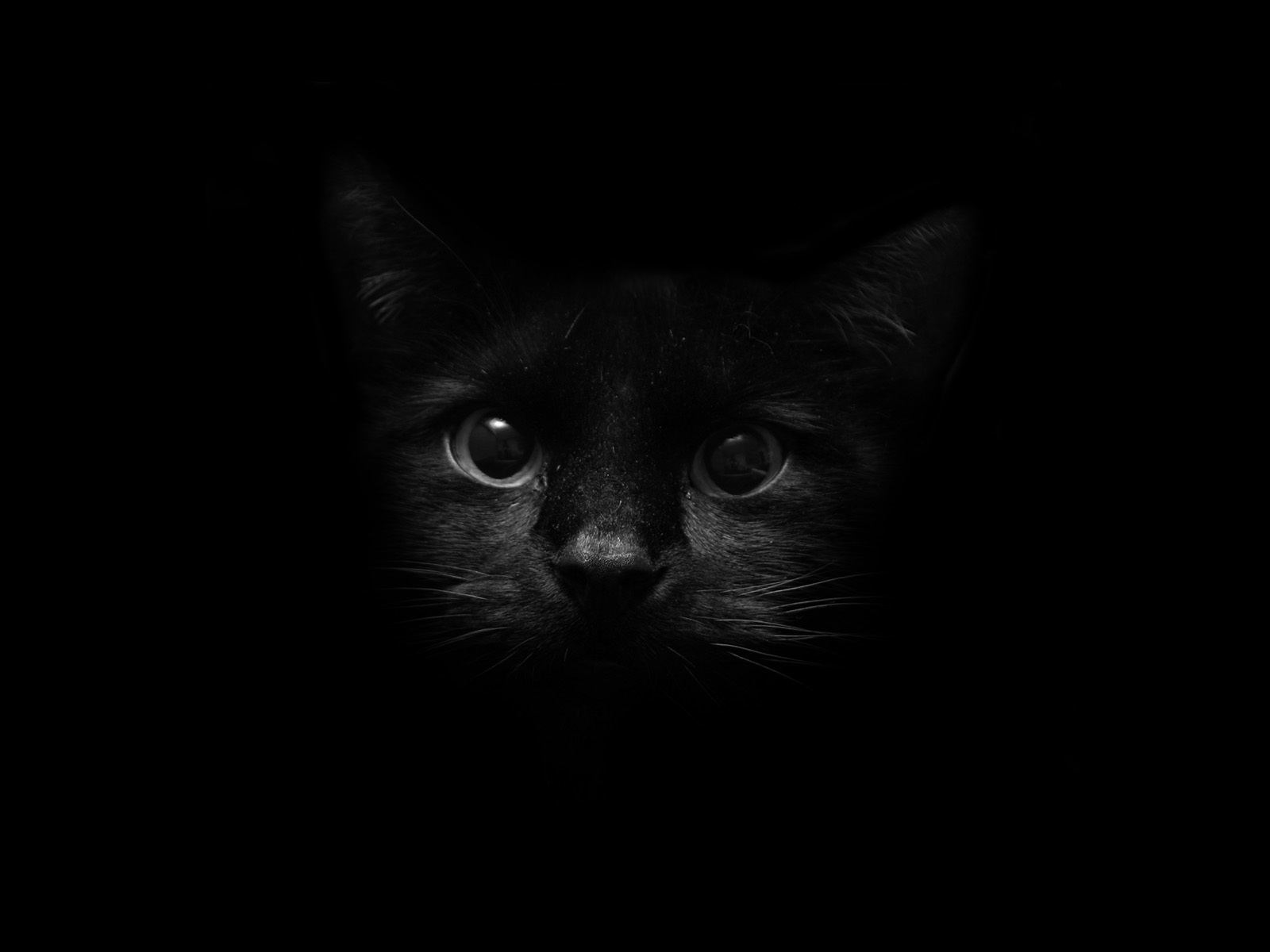 sarahplove 画像 black cat hd 壁紙 and background 写真 19877395