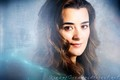 Cote in Blue