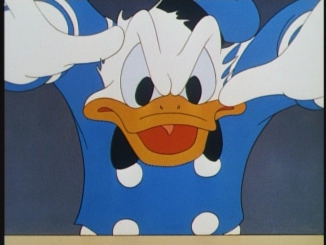 donald duck donald duck
